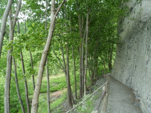 Gravel path between a downwards slope covered with small trees (left) and a tall stone wall (right)
