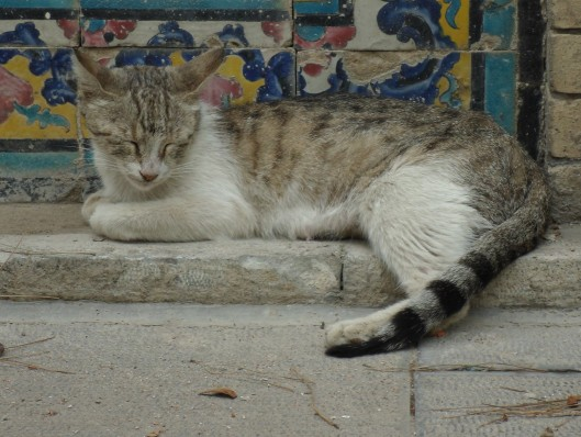 A cat sleeping in the shade at Golestan Palace, Tehran.