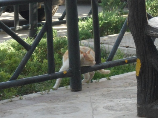 A tabby-coloured cat turns halfway around and stretches its neck from a bed of greenery to a paved terrace