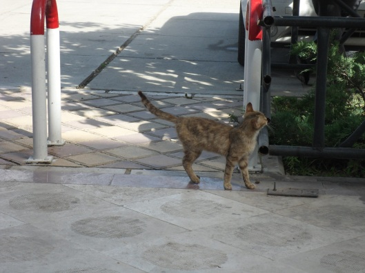 A stray cat at the Iman Khomeni monument, Tehran.
