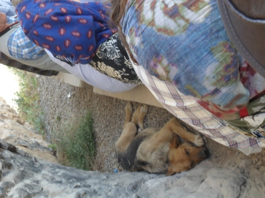 A dog sleeps in the shade of a collapsed cave with Sasanid reliefs.